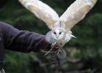 Owl Encounter - Family Ticket