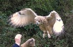 Owl Encounter - Adult